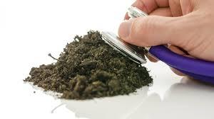 Как определить кислотность почвы самостоятельно, определение в домашних  условиях измерителем и прочими приборами, по сорнякам и народными способами