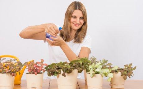 Как выбрать удобрения для комнатных растений