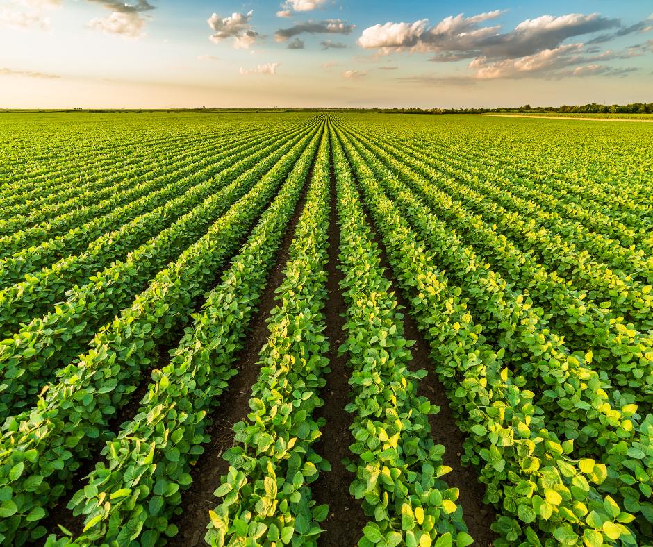 Мониторинг земель и растений сельскохозяйственного назначения