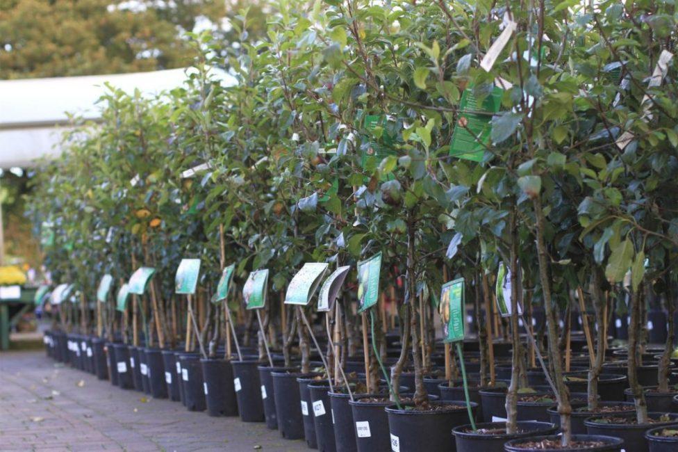Садовый питомник растений: подбор сортов саженцев черники и груш